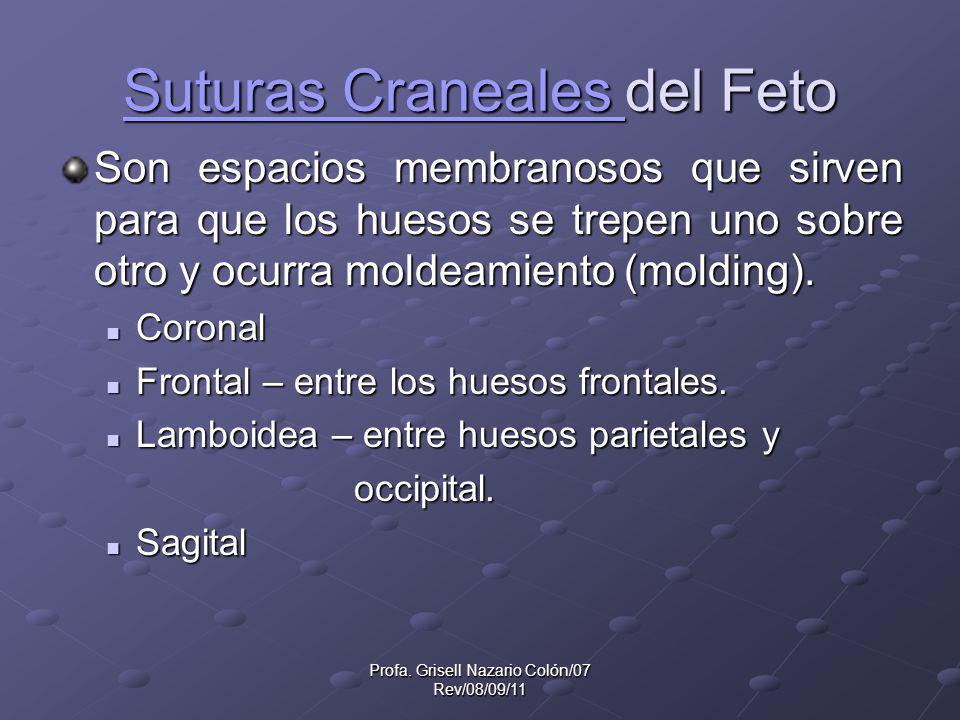 Profa. Grisell Nazario Colón/07 Rev/08/09/11 Suturas Craneales Suturas Craneales del Feto Suturas Craneales Son espacios membranosos que sirven para q