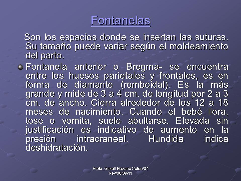Profa. Grisell Nazario Colón/07 Rev/08/09/11 Fontanelas Son los espacios donde se insertan las suturas. Su tamaño puede variar según el moldeamiento d