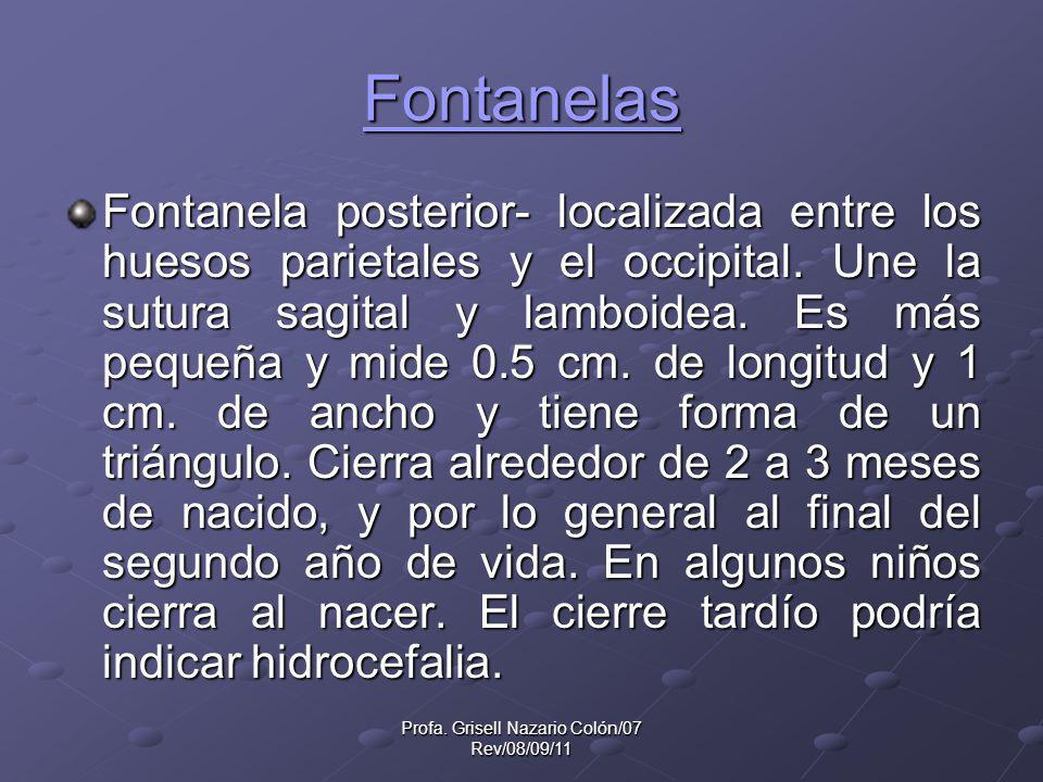 Profa. Grisell Nazario Colón/07 Rev/08/09/11 Fontanelas Fontanela posterior- localizada entre los huesos parietales y el occipital. Une la sutura sagi