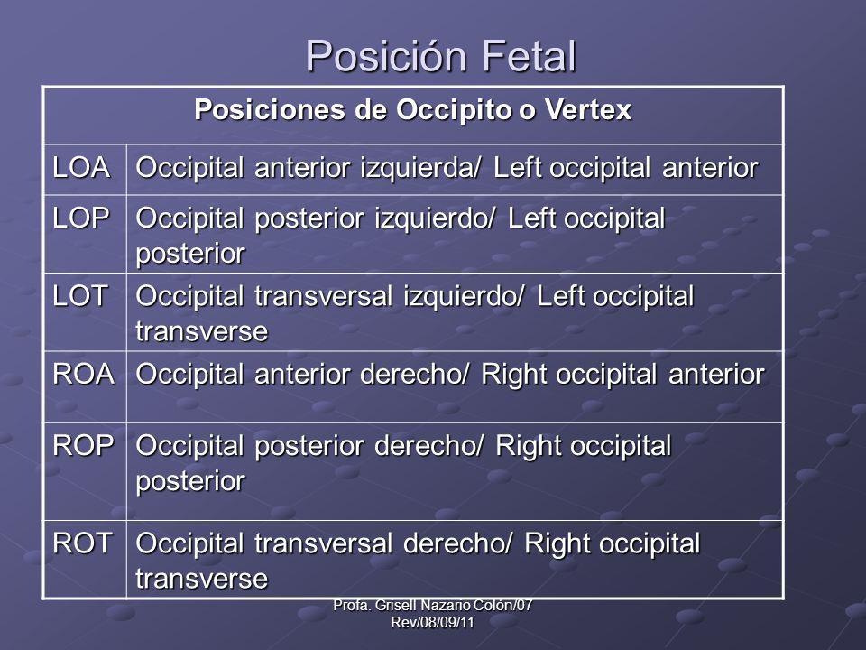 Profa. Grisell Nazario Colón/07 Rev/08/09/11 Posición Fetal Posiciones de Occipito o Vertex LOA Occipital anterior izquierda/ Left occipital anterior