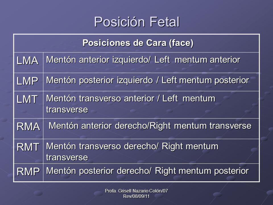 Profa. Grisell Nazario Colón/07 Rev/08/09/11 Posición Fetal Posiciones de Cara (face) Posiciones de Cara (face) LMA Mentón anterior izquierdo/ Left me