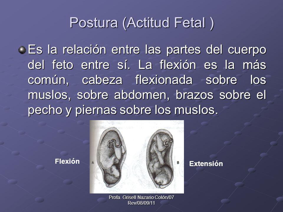 Profa. Grisell Nazario Colón/07 Rev/08/09/11 Postura (Actitud Fetal ) Es la relación entre las partes del cuerpo del feto entre sí. La flexión es la m