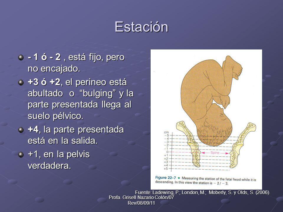 Profa. Grisell Nazario Colón/07 Rev/08/09/11 Estación - 1 ó - 2, está fijo, pero no encajado. +3 ó +2, el perineo está abultado o bulging y la parte p