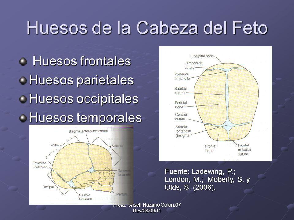 Profa. Grisell Nazario Colón/07 Rev/08/09/11 Huesos de la Cabeza del Feto Huesos frontales Huesos frontales Huesos parietales Huesos occipitales Hueso
