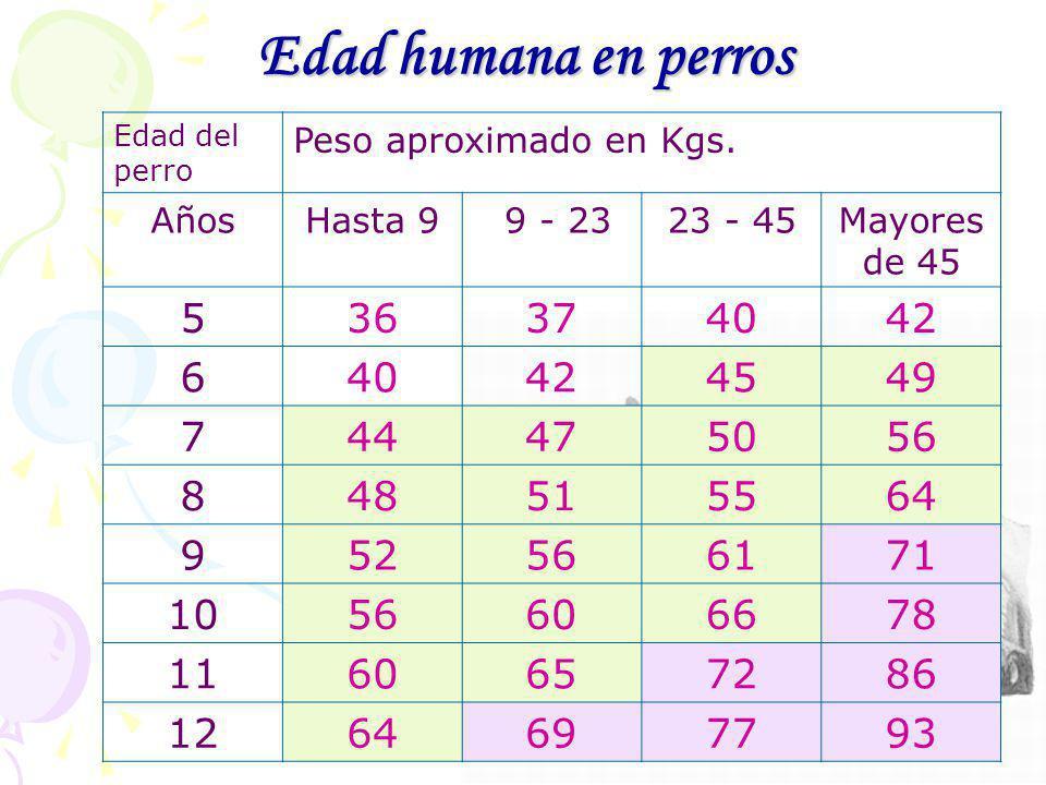 Ana Benavent Ochando 14 Edad humana en perros Edad del perro Peso aproximado en Kgs. AñosHasta 9 9 - 2323 - 45Mayores de 45 536374042 640424549 744475