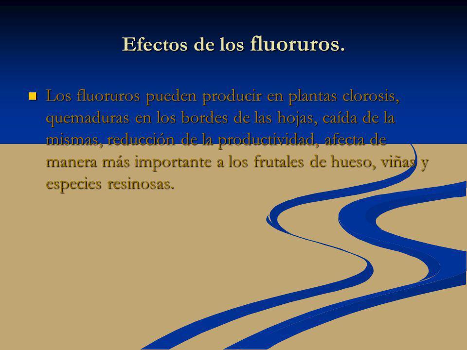 Efectos de los fluoruros. Los fluoruros pueden producir en plantas clorosis, quemaduras en los bordes de las hojas, caída de la mismas, reducción de l