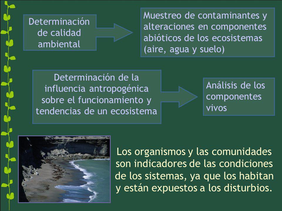 Determinación de calidad ambiental Muestreo de contaminantes y alteraciones en componentes abióticos de los ecosistemas (aire, agua y suelo) Determina