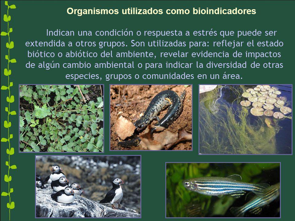 Organismos utilizados como bioindicadores Indican una condición o respuesta a estrés que puede ser extendida a otros grupos.