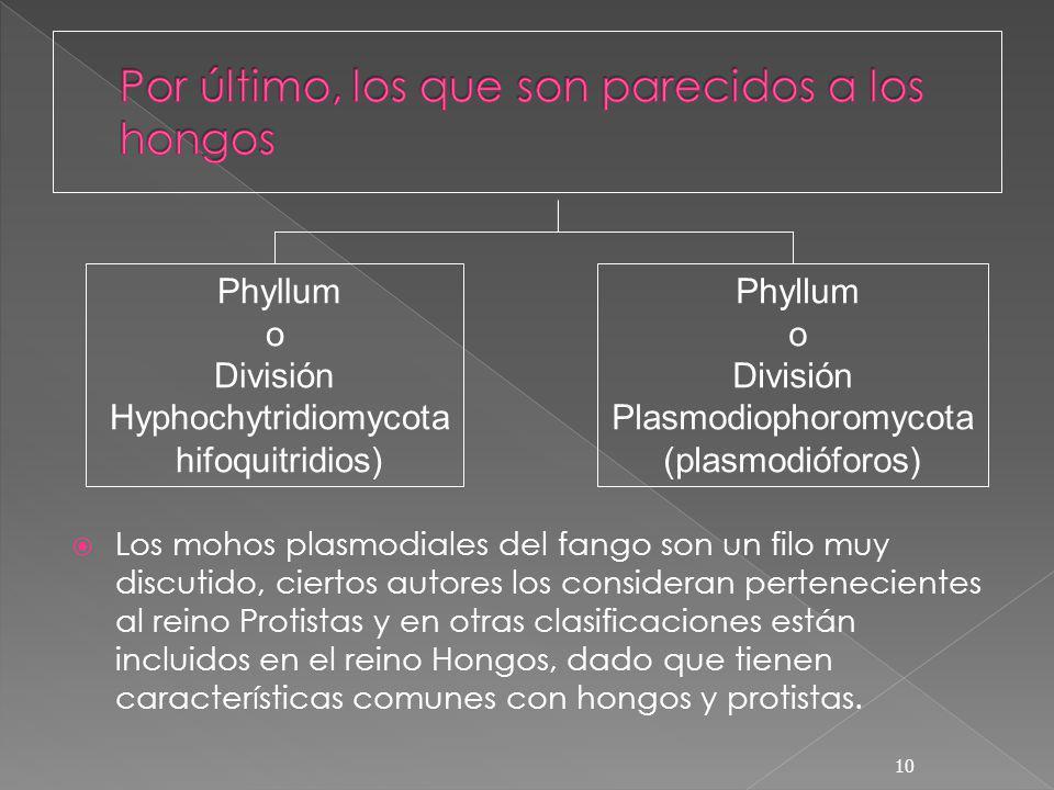 Los mohos plasmodiales del fango son un filo muy discutido, ciertos autores los consideran pertenecientes al reino Protistas y en otras clasificacione