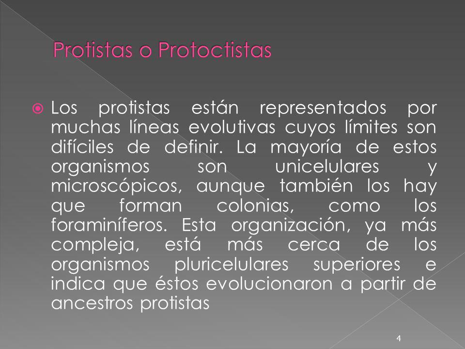 Los protistas están representados por muchas líneas evolutivas cuyos límites son difíciles de definir. La mayoría de estos organismos son unicelulares