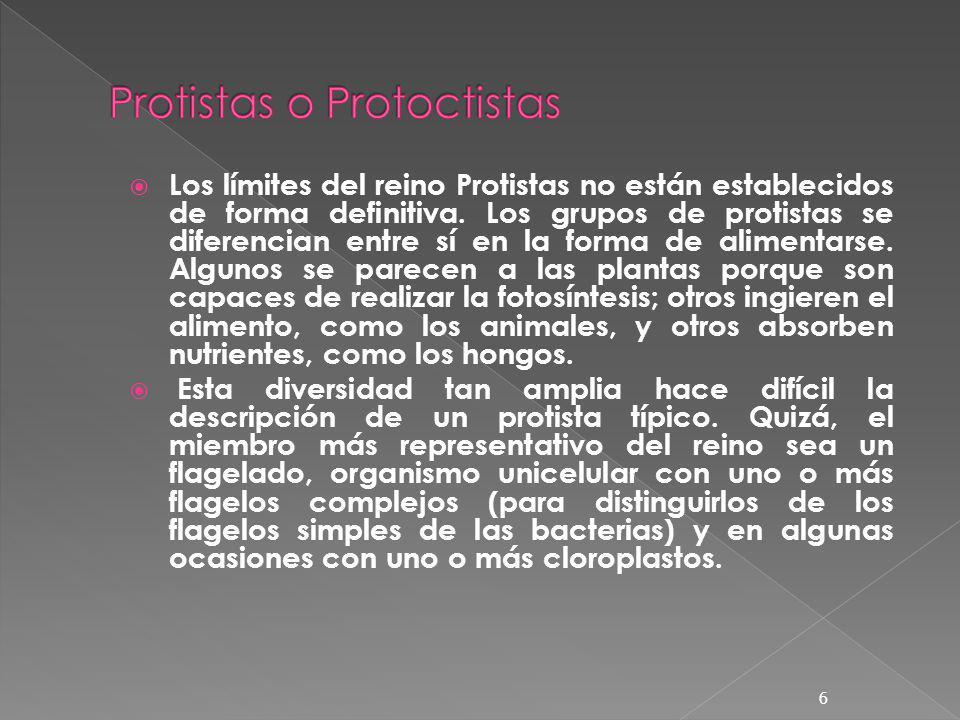 Los límites del reino Protistas no están establecidos de forma definitiva. Los grupos de protistas se diferencian entre sí en la forma de alimentarse.