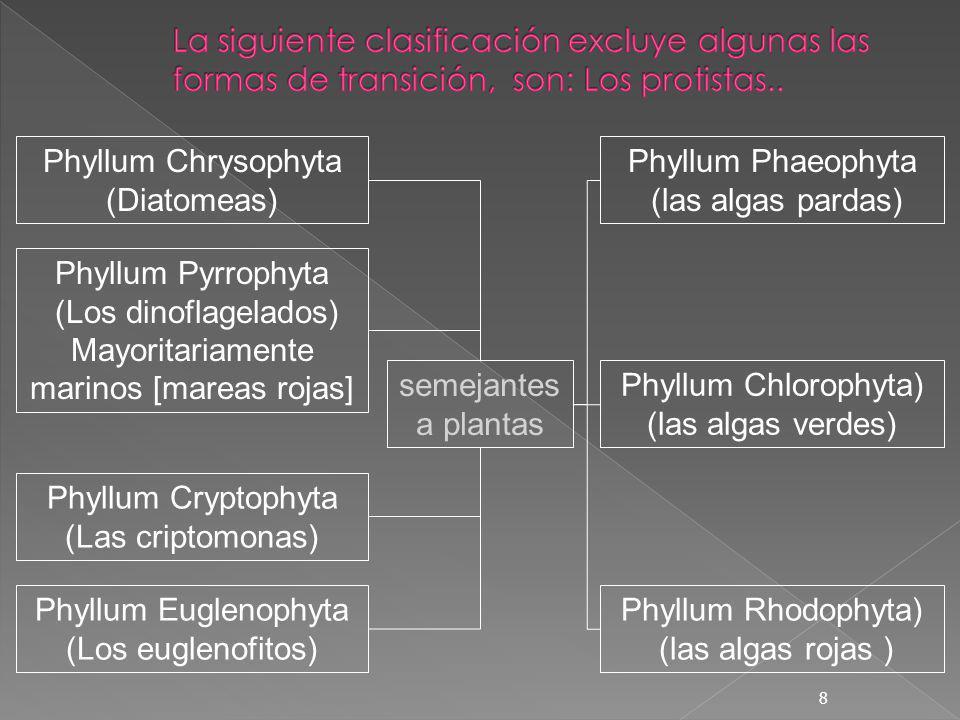 8 Phyllum Chrysophyta (Diatomeas) Phyllum Pyrrophyta (Los dinoflagelados) Mayoritariamente marinos [mareas rojas] Phyllum Cryptophyta (Las criptomonas
