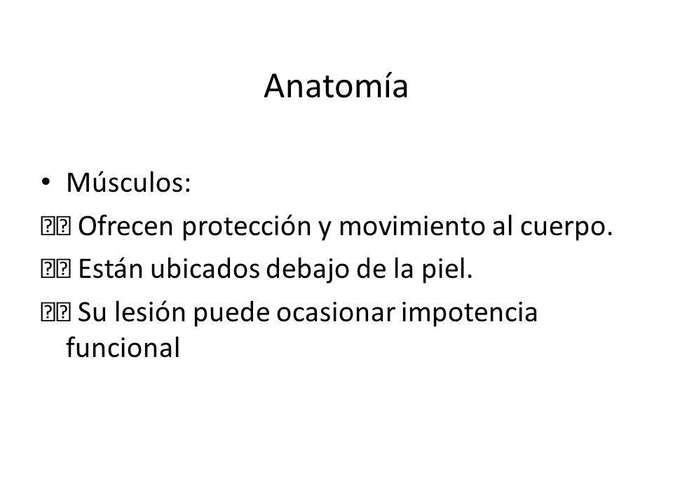 Anatomía Músculos: Ofrecen protección y movimiento al cuerpo. Están ubicados debajo de la piel. Su lesión puede ocasionar impotencia funcional