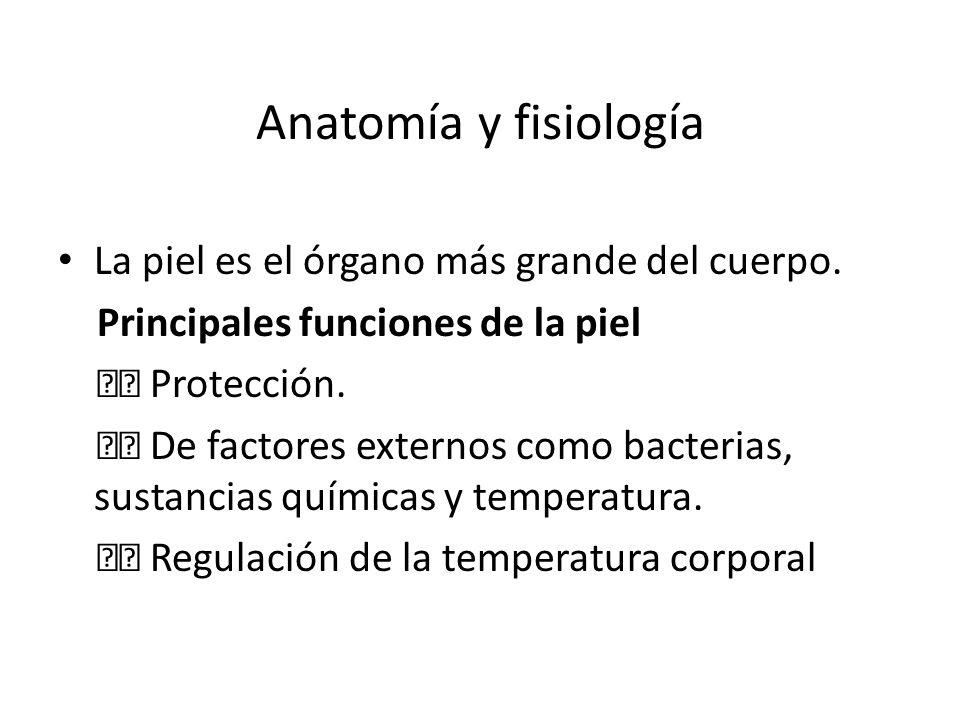 Anatomía y fisiología La piel es el órgano más grande del cuerpo. Principales funciones de la piel Protección. De factores externos como bacterias, su