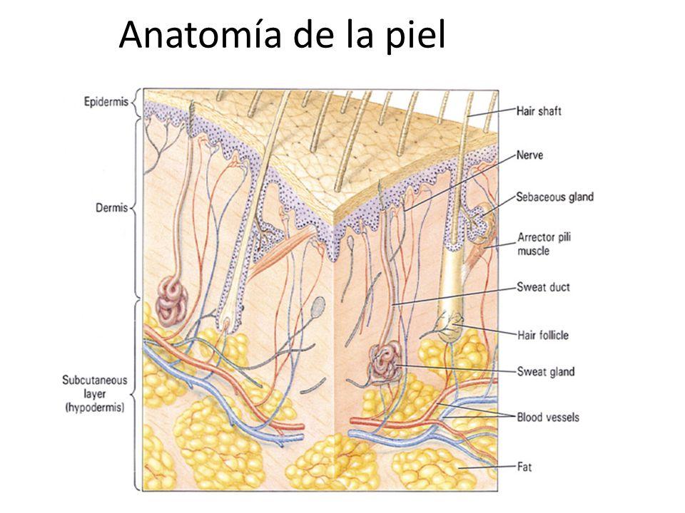 HERIDAS PRODUCIDAS POR ANZUELOS Atraviese la piel siguiendo la curvatura del anzuelo, hasta que la punta salga al otro lado.