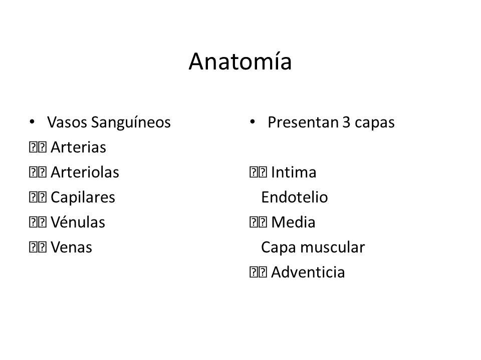 Anatomía Vasos Sanguíneos Arterias Arteriolas Capilares Vénulas Venas Presentan 3 capas Intima Endotelio Media Capa muscular Adventicia