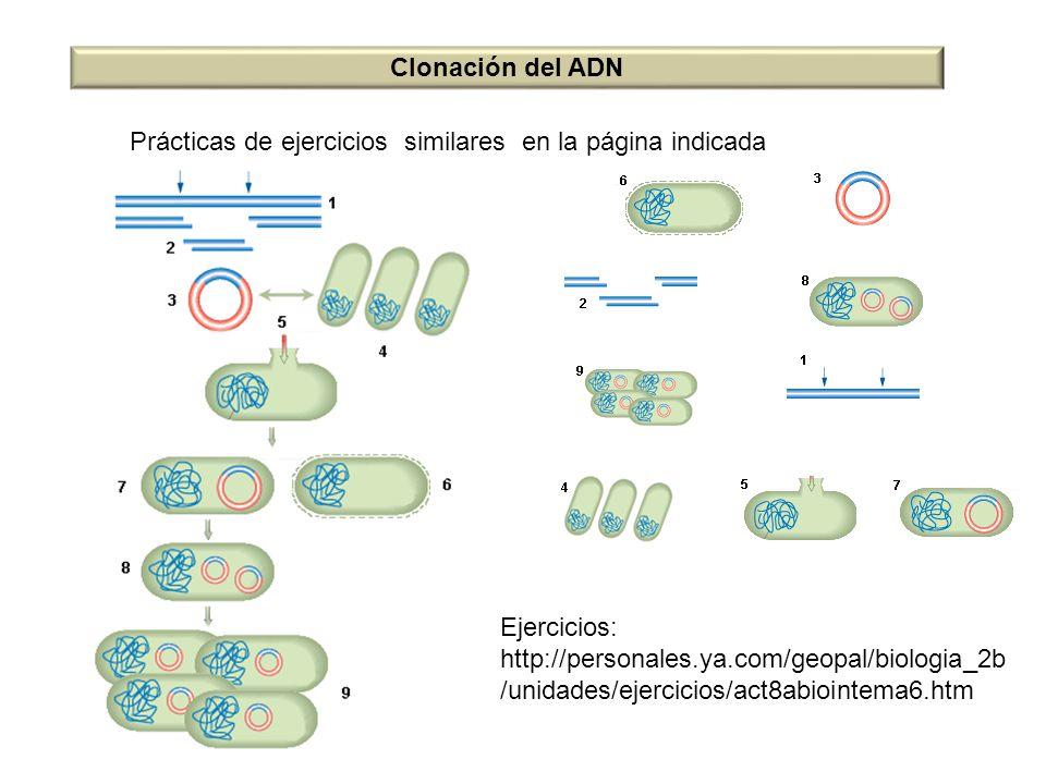 Clonación del ADN Ejercicios: http://personales.ya.com/geopal/biologia_2b /unidades/ejercicios/act8abiointema6.htm Prácticas de ejercicios similares e