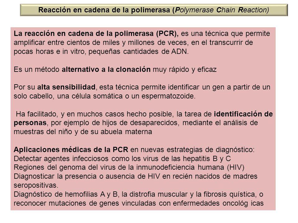 Reacción en cadena de la polimerasa (Polymerase Chain Reaction) La reacción en cadena de la polimerasa (PCR), es una técnica que permite amplificar en