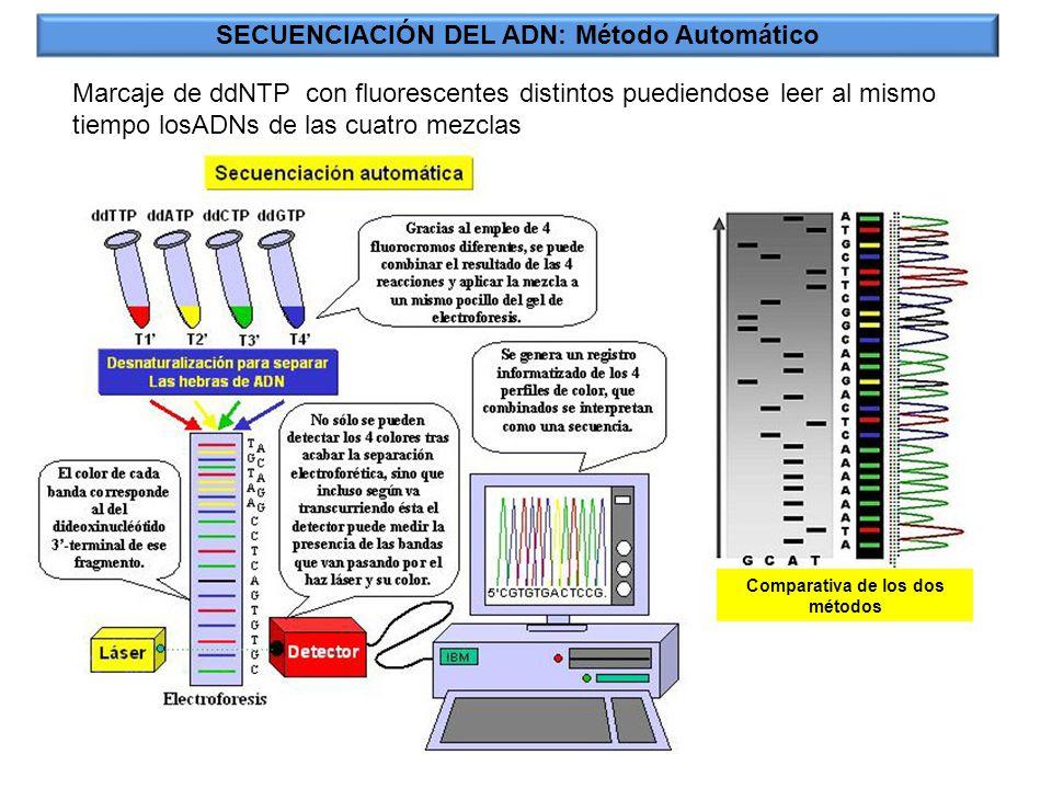 SECUENCIACIÓN DEL ADN: Método Automático Marcaje de ddNTP con fluorescentes distintos puediendose leer al mismo tiempo losADNs de las cuatro mezclas C