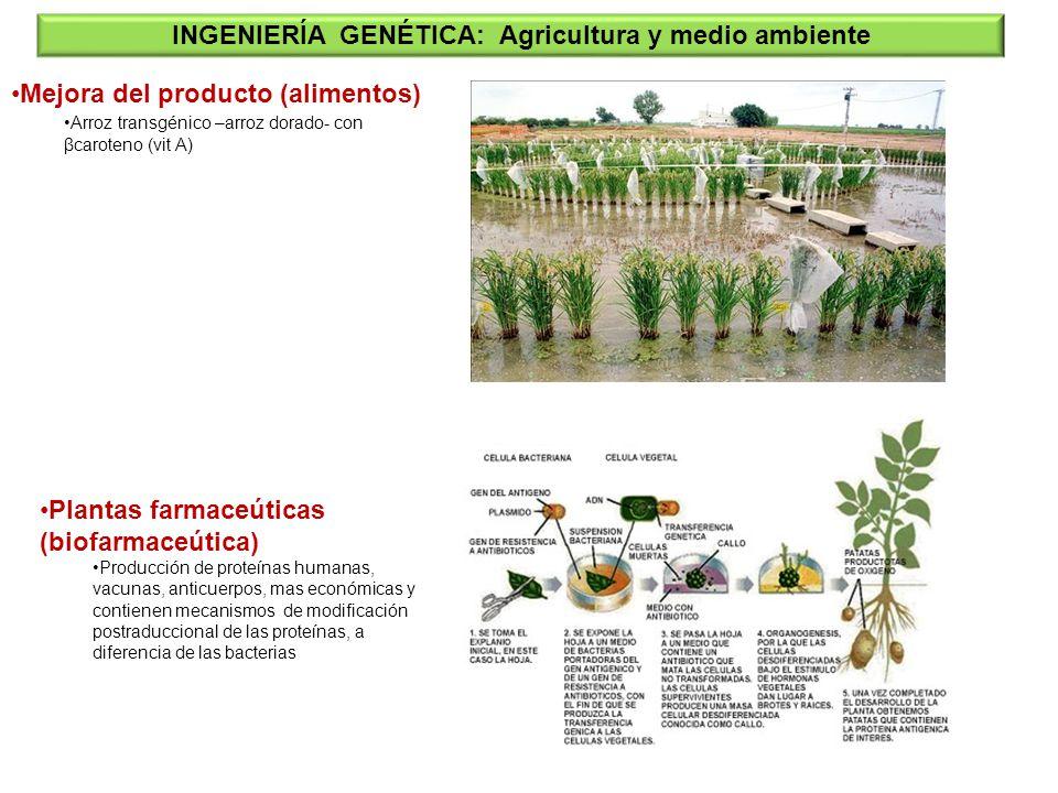 Plantas farmaceúticas (biofarmaceútica) Producción de proteínas humanas, vacunas, anticuerpos, mas económicas y contienen mecanismos de modificación p