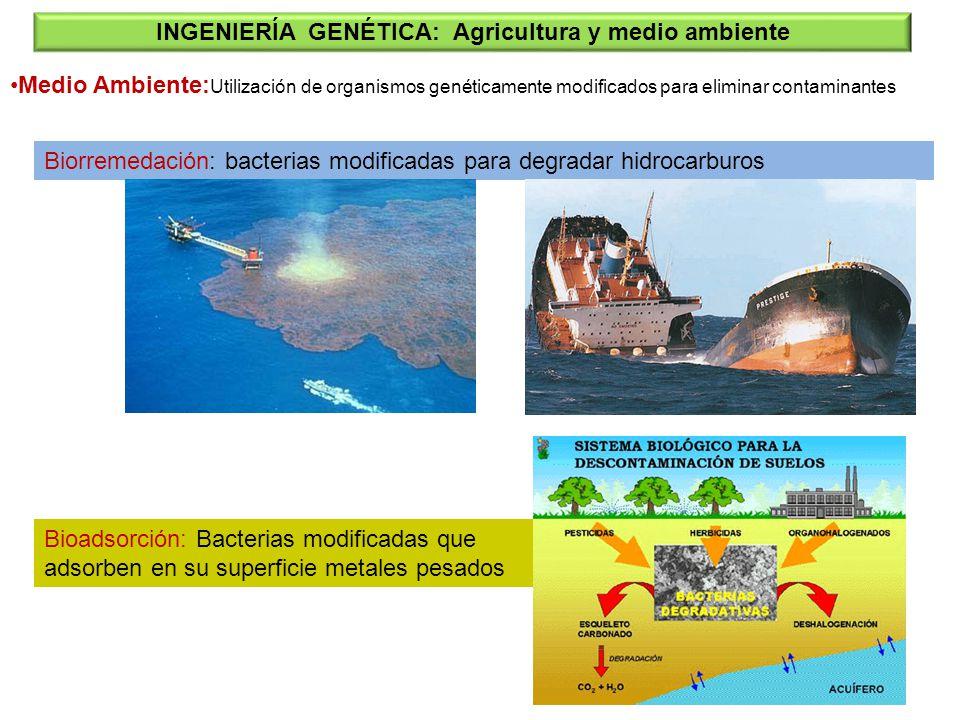Medio Ambiente: Utilización de organismos genéticamente modificados para eliminar contaminantes INGENIERÍA GENÉTICA: Agricultura y medio ambiente Bior