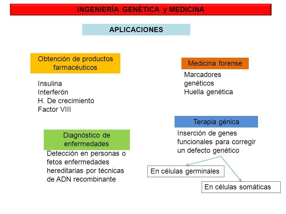 INGENIERÍA GENÉTICA y MEDICINA APLICACIONES Obtención de productos farmacéuticos Medicina forense Diagnóstico de enfermedades Terapia génica Insulina