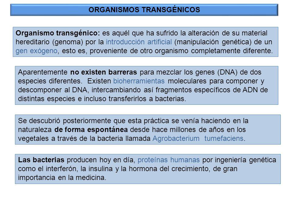 INGENIERÍA GENÉTICA: Agricultura y medio ambiente Actualmente se consiguen mejorar diferentes características con técnicas de ADN recombinante -Plantas transgénicas- FASES: 1.