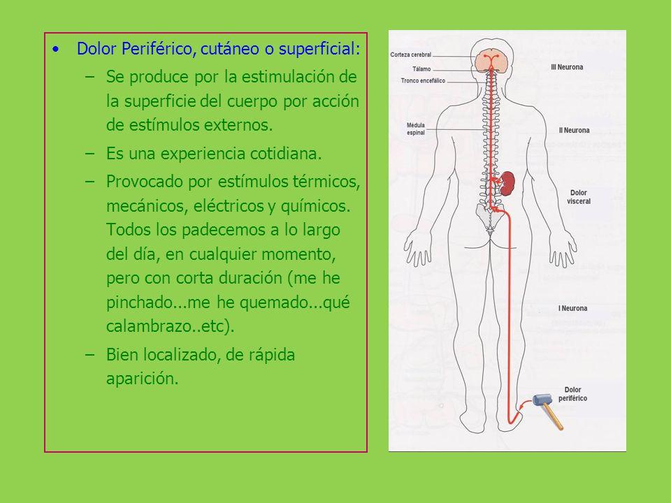 Dolor Periférico, cutáneo o superficial: –Se produce por la estimulación de la superficie del cuerpo por acción de estímulos externos. –Es una experie