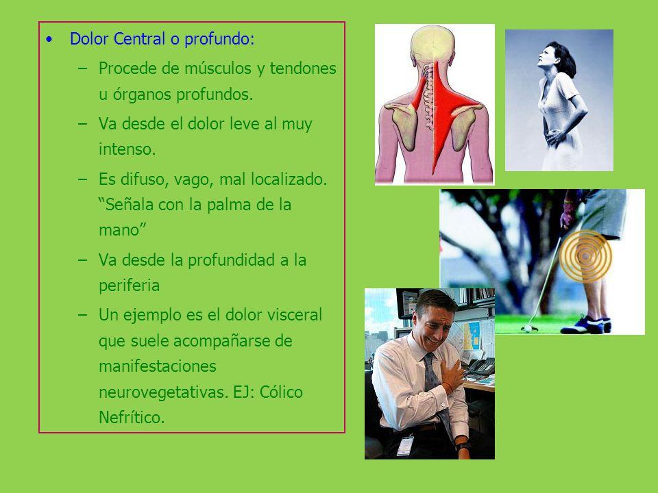 Dolor Central o profundo: –Procede de músculos y tendones u órganos profundos. –Va desde el dolor leve al muy intenso. –Es difuso, vago, mal localizad