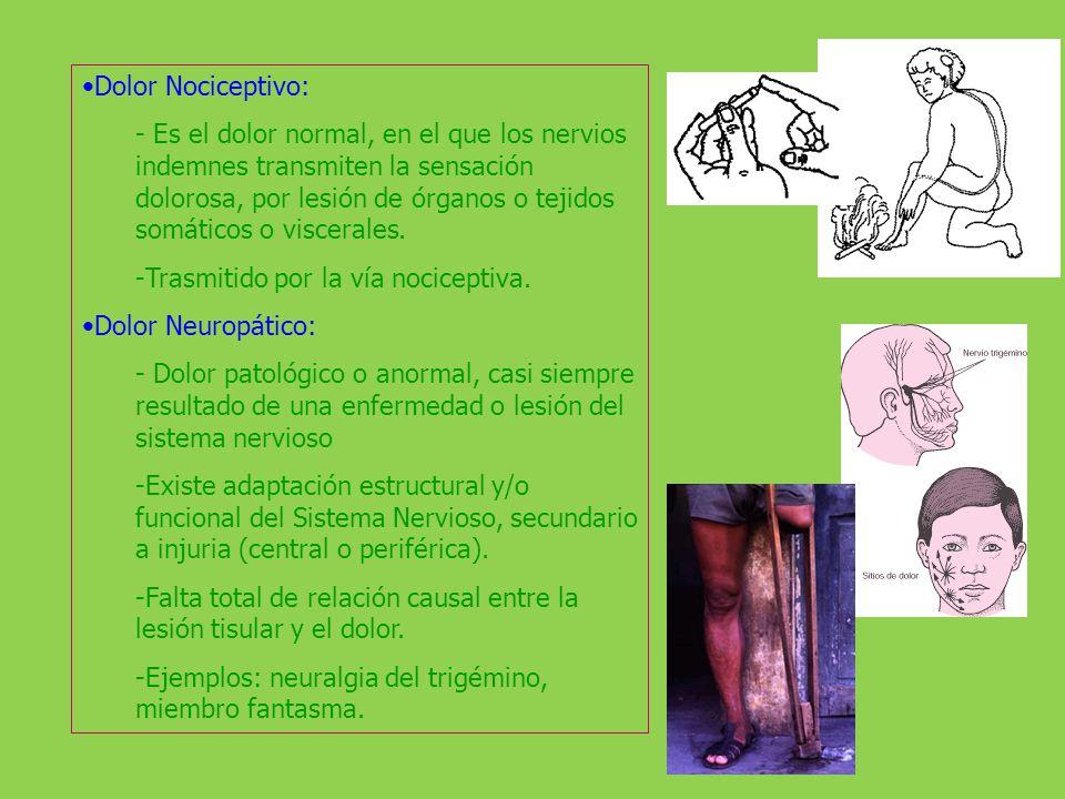 Dolor Nociceptivo: - Es el dolor normal, en el que los nervios indemnes transmiten la sensación dolorosa, por lesión de órganos o tejidos somáticos o