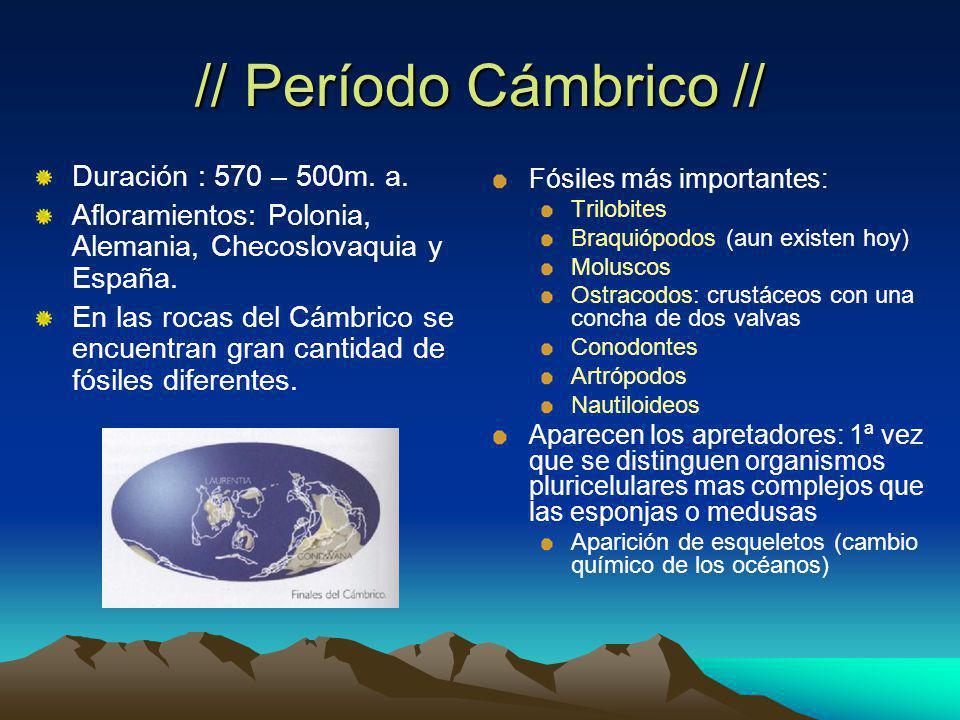 // Período Cámbrico // Duración : 570 – 500m.a.
