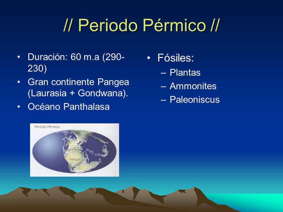 // Periodo Pérmico // Duración: 60 m.a (290- 230) Gran continente Pangea (Laurasia + Gondwana).