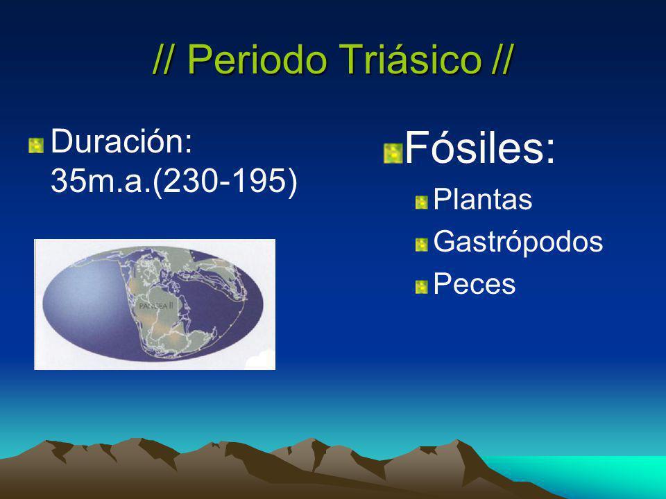 // Periodo Triásico // Duración: 35m.a.(230-195) Fósiles: Plantas Gastrópodos Peces