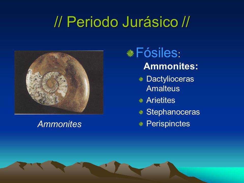 // Periodo Jurásico // Fósiles : Ammonites: Dactylioceras Amalteus Arietites Stephanoceras Perispinctes Ammonites