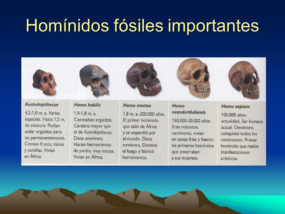 Homínidos fósiles importantes