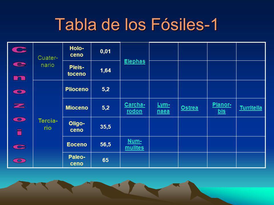 Tabla de los Fósiles-1 Cuater- nario Holo- ceno 0,01 Elephas Pleis- toceno 1,64 Tercia- rio Plioceno5,2 Mioceno5,2 Carcha- rodon Lym- naea Ostrea Planor- bis Turritella Oligo- ceno 35,5 Eoceno56,5 Num- mulites Paleo- ceno 65
