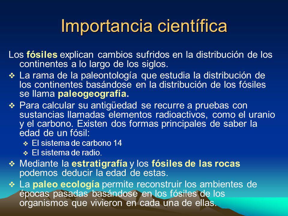 Importancia científica Los fósiles explican cambios sufridos en la distribución de los continentes a lo largo de los siglos.