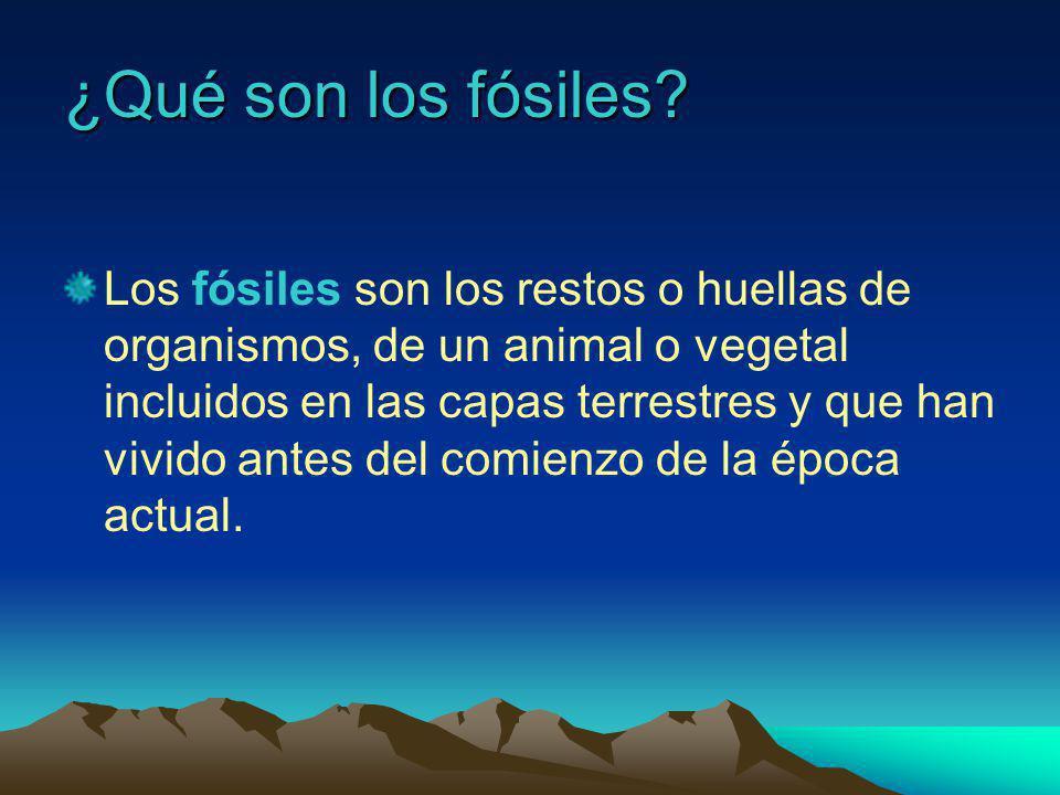 ¿Qué son los fósiles.