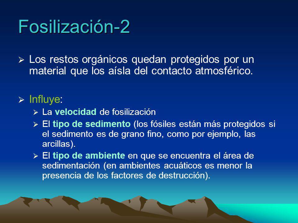 Fósiles guía o fósiles característicos ¿Qué son.