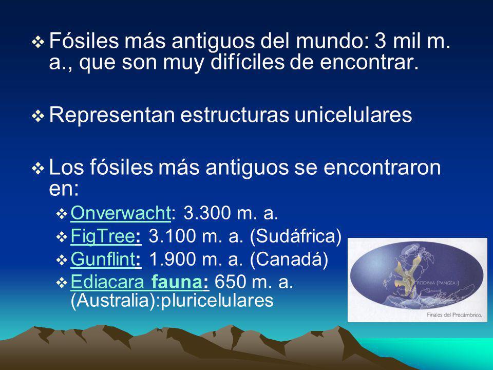 Fósiles más antiguos del mundo: 3 mil m.a., que son muy difíciles de encontrar.