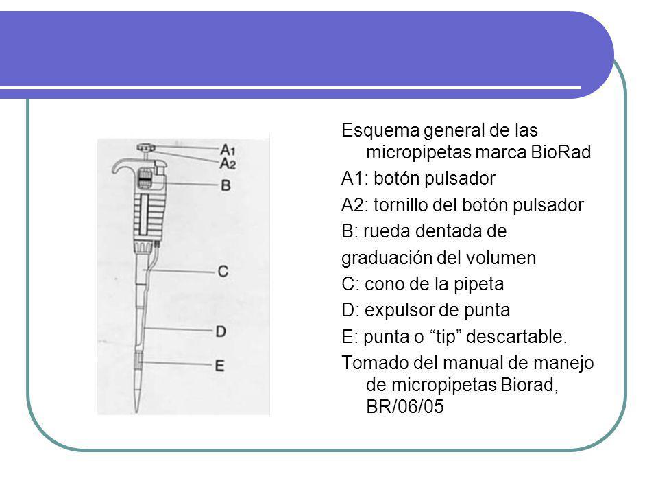 Esquema general de las micropipetas marca BioRad A1: botón pulsador A2: tornillo del botón pulsador B: rueda dentada de graduación del volumen C: cono
