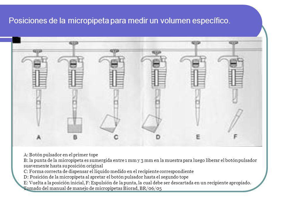 Posiciones de la micropipeta para medir un volumen específico. A: Botón pulsador en el primer tope B: la punta de la micropipeta es sumergida entre 1
