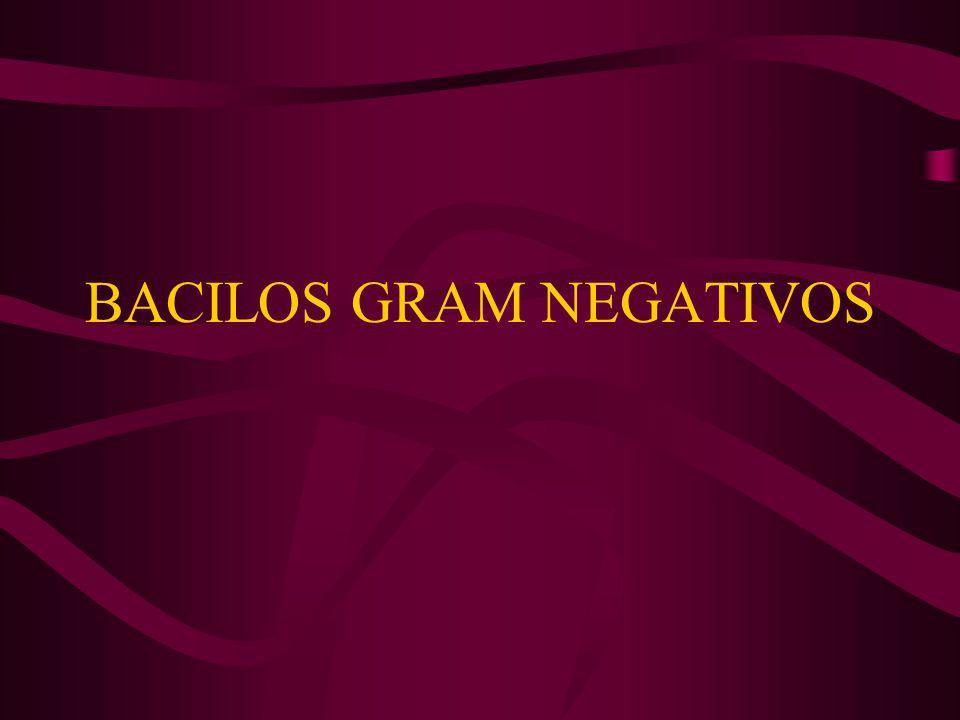 ENTEROBACTERIAS BACILOS GRAM – FACULTATIVOS NO EXIGENTES FERMENTADORES DE H DE CARBONO MÓVILES (FLAGELOS) O INMÓVILES ALGUNAS ESPECIES: CÁPSULA FORMAN PARTE DE LA FLORA INTESTINAL DEL HOMBRE Y ANIMALES.