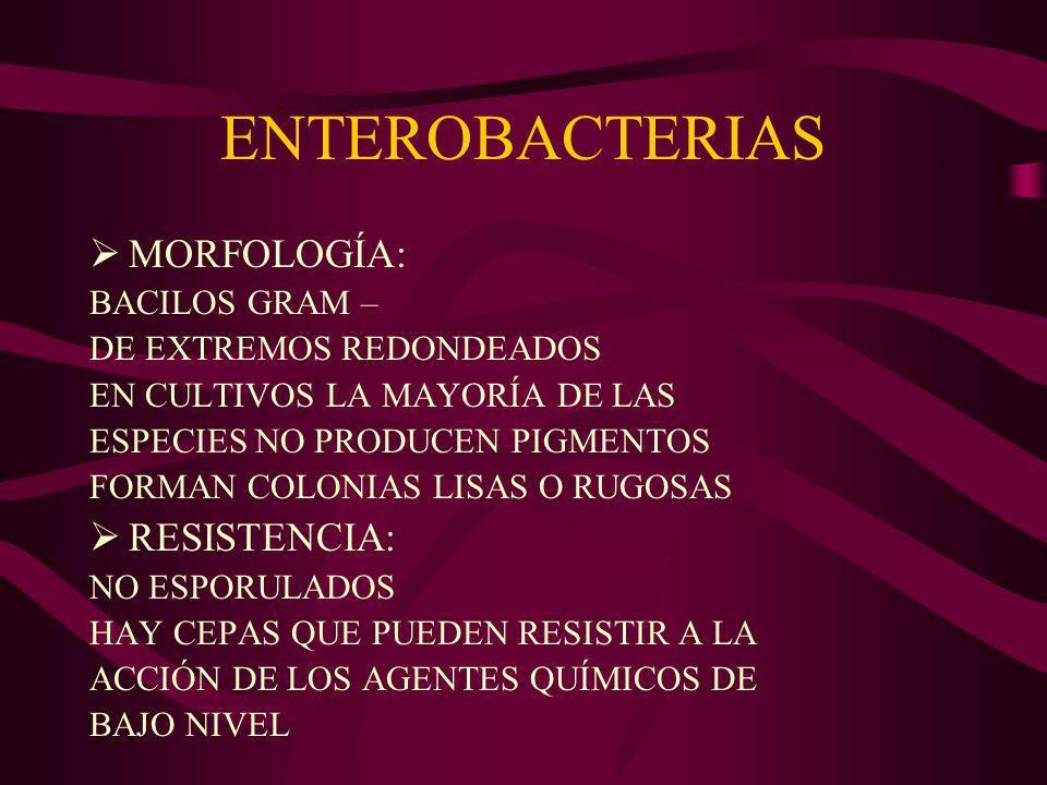 ENTEROBACTERIAS RELACIÓN CON EL HOMBRE: CEPAS QUE FORMAN PARTE DE LA FLORA ENTÉRICA PATÓGENOS PRIMARIOS OPORTUNISTAS