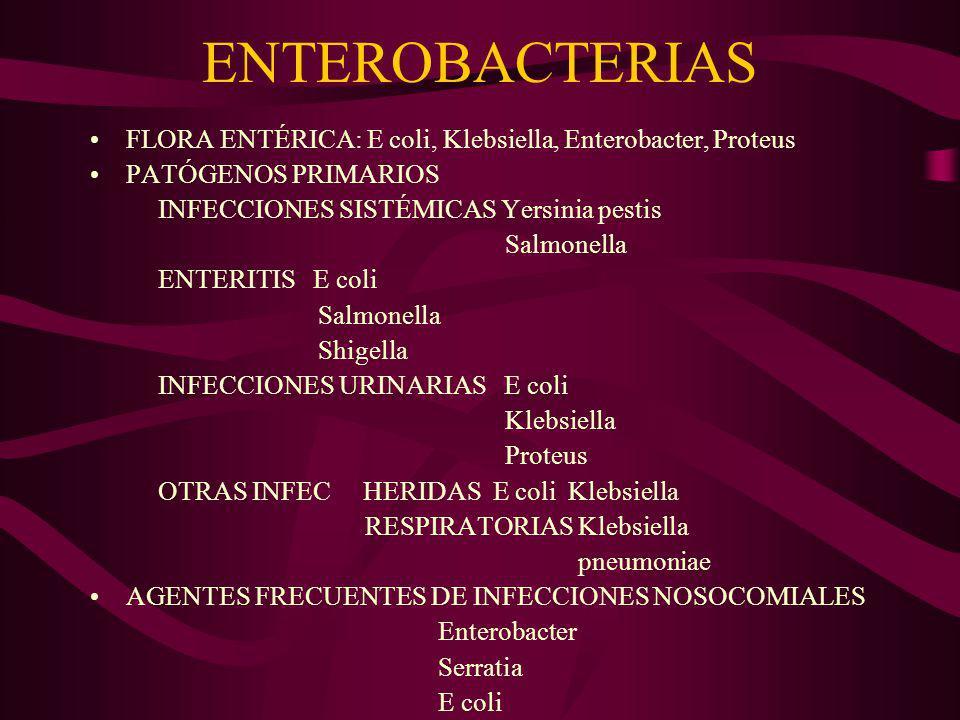 ENTEROBACTERIAS DIAGNÓSTICO MICROBIOLÓGICO PROCESOS SEPTICÉMICOS: HEMOCULTIVO ENTERITIS: COPROCULTIVO INFECC.