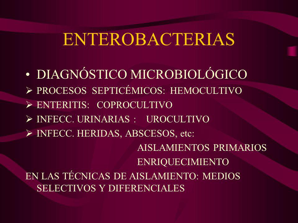 V cholerae CÓLERA TRATAMIENTO: REHIDRATACIÓN (ANTIBIÓTICOS) PREVENCIÓN: CAMPAÑAS AGUA POTABLE- SANITARIAS CONDICIONES SANITARIAS