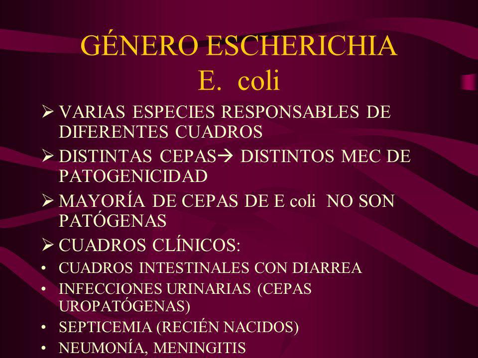 GÉNERO AEROMONAS GÉNERO PLESIOMONAS GÉRMENES DEL AGUA INFECCIONES HERIDAS CUADROS DIARREA