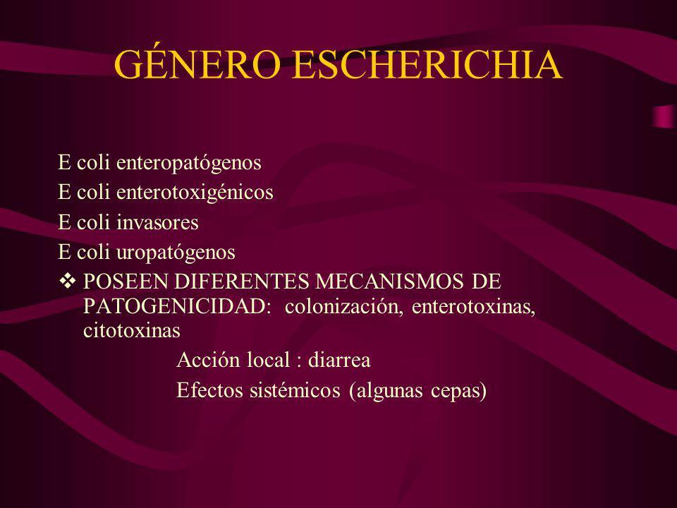 GÉNERO SHIGELLA ALGUNAS ESPECIES: S flexneri S sonnei S dysenteriae S boydii PRODUCEN DIARREA CON SANGRE Y MUCUS (DISENTERIA) CUADRO AUTOLIMITANTE (PUEDE SER FATAL EN NIÑOS) PRODUCEN ATERACIONES EN LA MUCOSA DEL COLON, PERO NO PASAN LAS BACTERIAS AL TORRENTE SANGUÍNEO (NO INVASIÓN SISTÉMICA) SE ADQUIERE POR : AGUAS CONTAMINADAS ALIMENTOS LAVADOS CON ESAS AGUAS MOSCAS