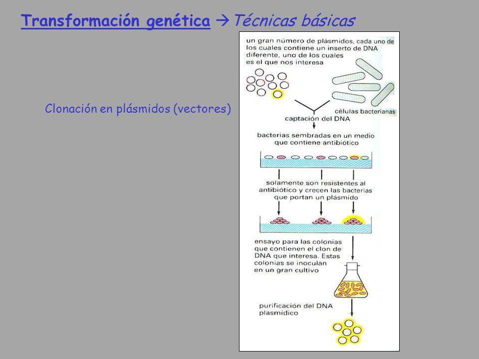 Transformación genética Técnicas básicas Clonación en plásmidos (vectores)