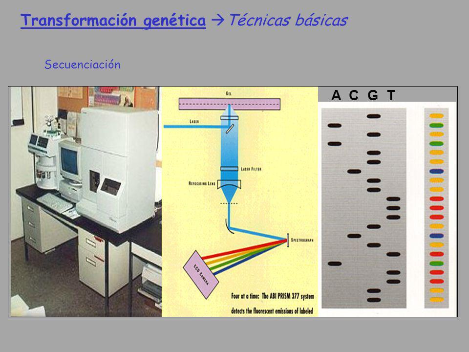 Transformación genética Técnicas básicas Secuenciación A C G T
